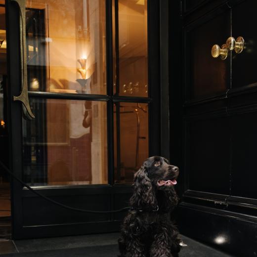 Le Burgundy Paris - Pet Friendly